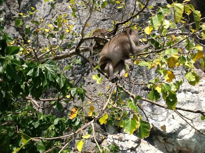 Photo of a monkey on Phi Phi Island, Thailand